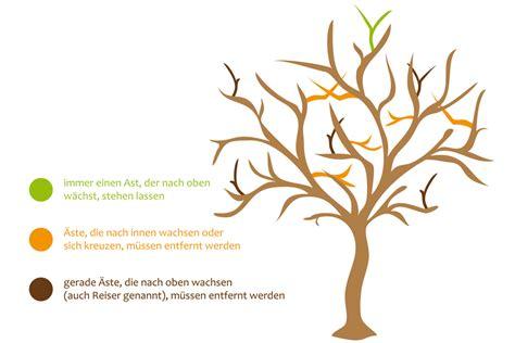 Schneiden Apfelb Umen 4175 by Obstb 228 Ume Richtig Schneiden Anleitung Obstbaumschnitt