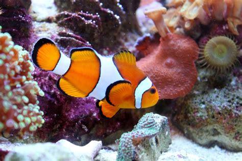 marine fish marine saltwater fish shop maidstone