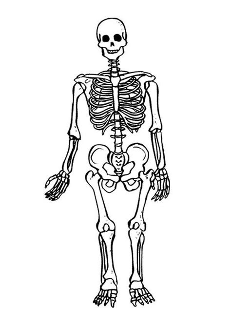 skeleton coloring page skeleton coloring pages for coloring home