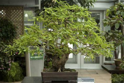 Plante D Appartement D Origine Tropicale by Bonsa 239 S D Int 233 Rieur Espace Pour La Vie