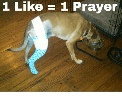 1 Like 1 Prayer Meme - 1 like 1 prayer meme on sizzle