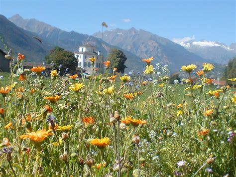 immagini paesaggi fioriti prati fioriti