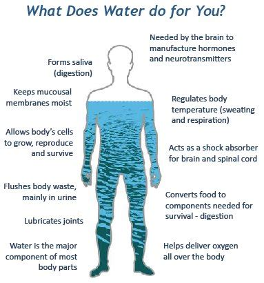 how many days can you survive without water? business