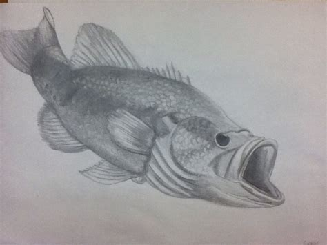 large mouth bass drawing my creations pinterest