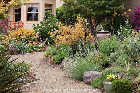 california backyard 323 best water wise landscaping images on landscaping gardening and gardens