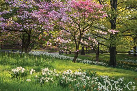 Botanic Garden New York by The New York Botanical Garden Celebrates Its 125th