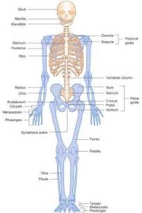 Tag anatomy of the body quiz archives human anatomy charts