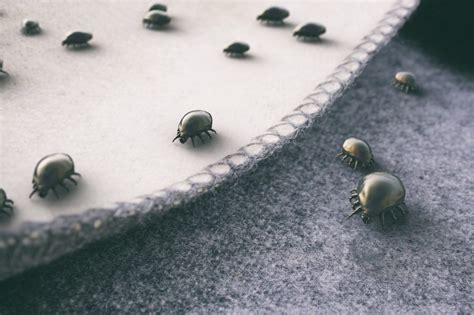 Comment Lutter Contre Les Mites lutter contre les mites comment les conseils de mon