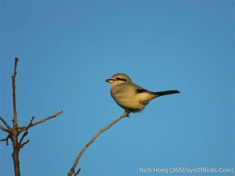 Birds Of The World 365 Days day 282 283 birds of milwaukee 365 days of birds