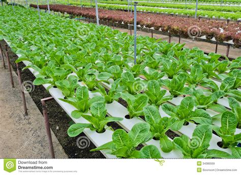 Hydroponic Vegetables Plantation Royalty Free Stock Images How To Build A Hydroponic Vegetable Garden