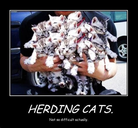 Herding Cats Meme - like herding cats meme related keywords like herding