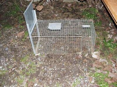 come allontanare i topi dal giardino a marcon un utopia per la nutria zoelagatta