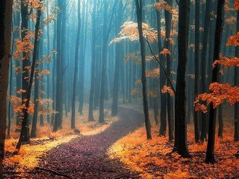 imagenes bonitas bosque de fantasias paisajes de octubre perturbadoras im 225 genes taringa