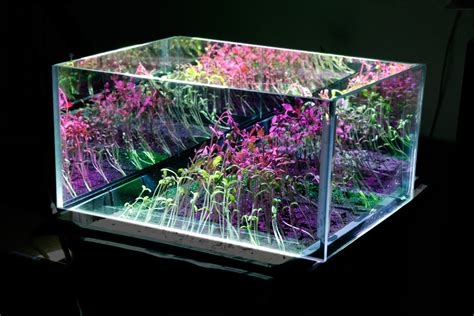 plant light how to choose a grow light humus products