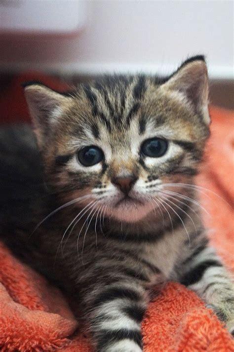 Cutest Cats Pet Pet Pet Product 8 by Kitten On Yummypets Pet Cat Kitten