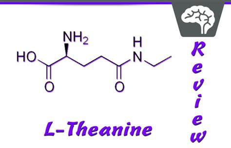 supplement l theanine l theanine review popular nootropic supplement for stress