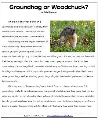 groundhog day questions 17 best groundhog images on preschool