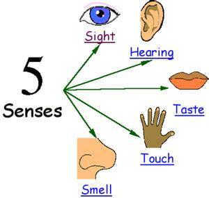 bonnie s books five senses six seven