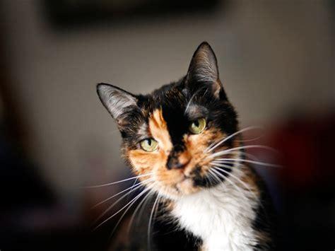 imagenes bonitas de animales que se mueven foto l epica avventura del gatto holly e altri animali