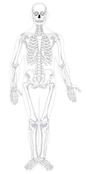 svg text color giza anatomia entziklopedia askea