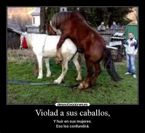 memes de caballos imagenes chistosas violad a sus caballos desmotivaciones
