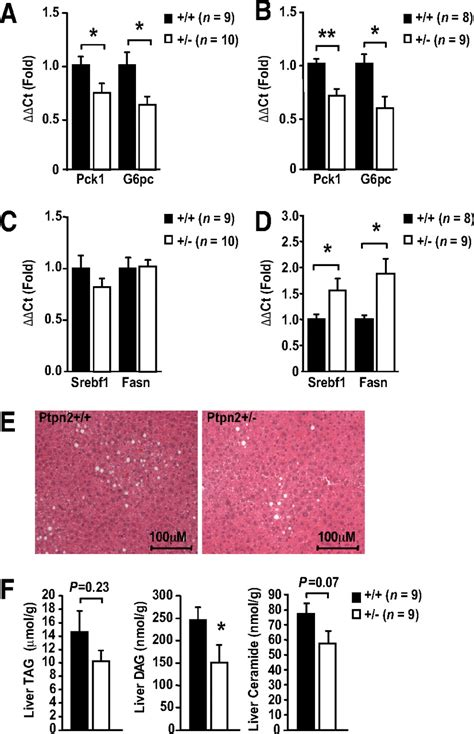 t protein liver t cell protein tyrosine phosphatase attenuates stat3 and