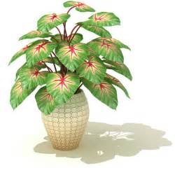 in door plants pot three four plants argements large potted indoor plant 3d model cgtrader com