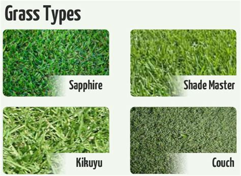 couch grass varieties eturf