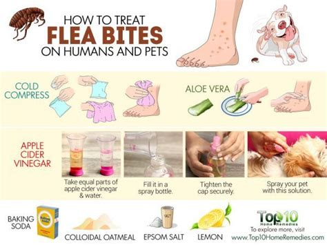 how to treat flea bites on humans and pets top 10 home