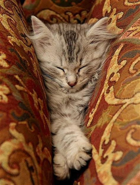 8 Places Cats Like To Sleep by 22 Adorable Kittens Sleeping Resting In Places And
