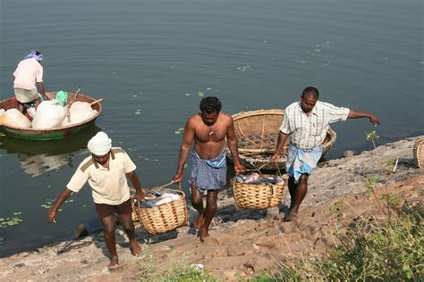 buy a fishing boat in india a taste of the past traditional coracle fishing in india