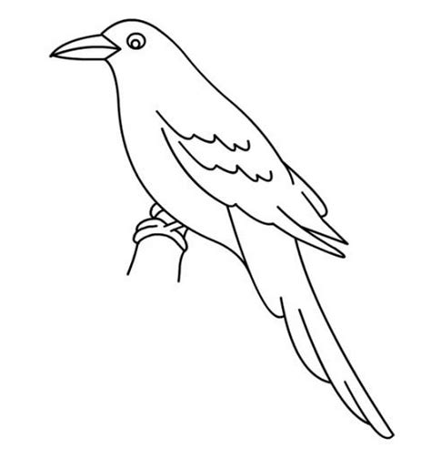printable coloring pages birds printable bird coloring pages coloring me