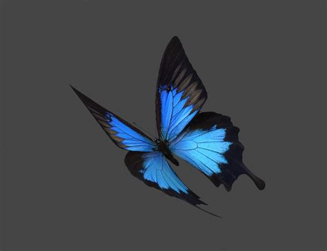 12 24 3d blue butterfly max flying butterfly
