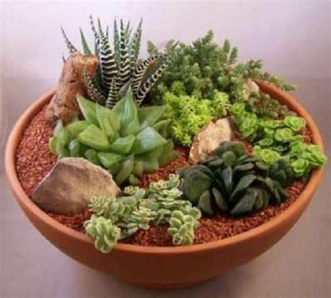 decorar con plantas suculentas las 25 mejores ideas sobre centros de mesa suculentos en