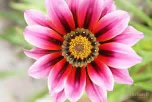 Flower In Bloom summer flower macro still life stuart bicknell