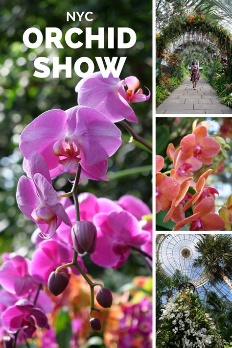 new york botanical garden orchid show bronx guide the