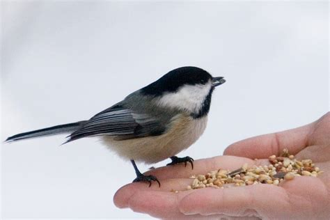 how to help birds during winter granny s tips
