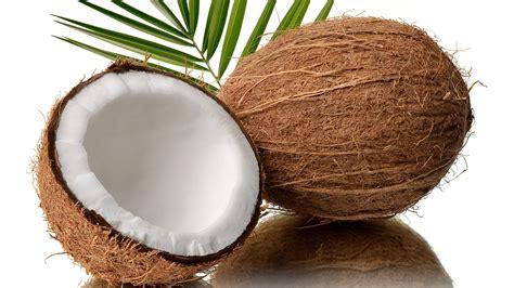 kokosnuss le coconut the tree of one of philippines export