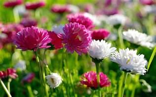 Flower Spring by Hd Wallpapers For Desktop Spring Flowers