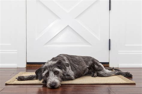 leaving a home alone 3 ways to keep home alone dogs entertained nation