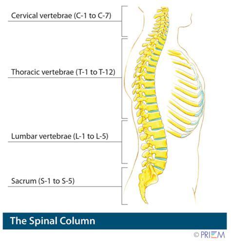 anatomy library   pain  neck pain spinenevada
