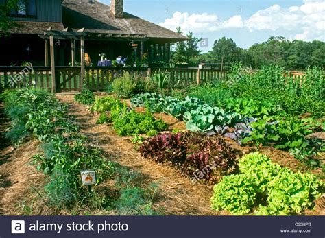 Large Fenced In Vegetable Garden Grows In Full Sun In Best Location For Vegetable Garden