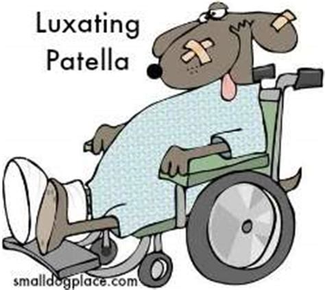 luxating patella in pugs small health