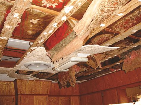 Termite Tunnels Hanging From Ceiling by Termites Damage Pictures