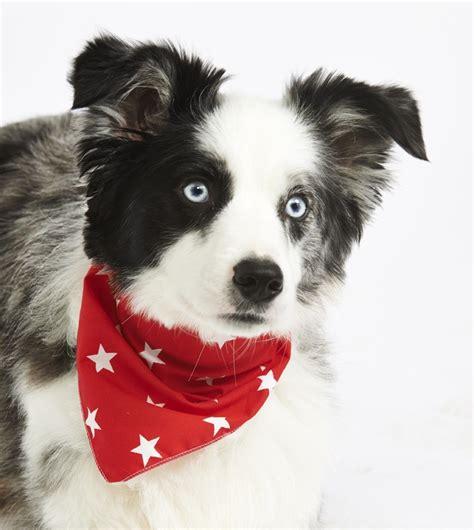 puppy bandanas bandana designer bandanas