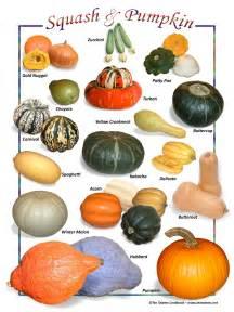 squash and pumpkin 35453 1403819834 1280 1280 jpg 960