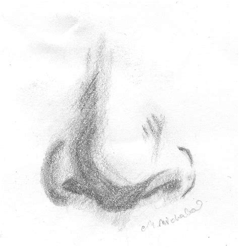 Sketches Nose by Drawing Human Nose