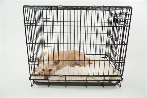 gabbie per cani da interno perch 233 le cucce da esterno sono meglio dei box per cani