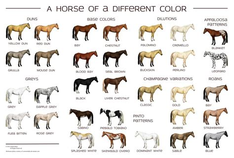 color of horses colors poster by siakhuinn create your own