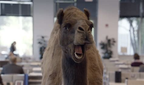 geico camel commercial hump day the brand rackley geico hump day camel commercial